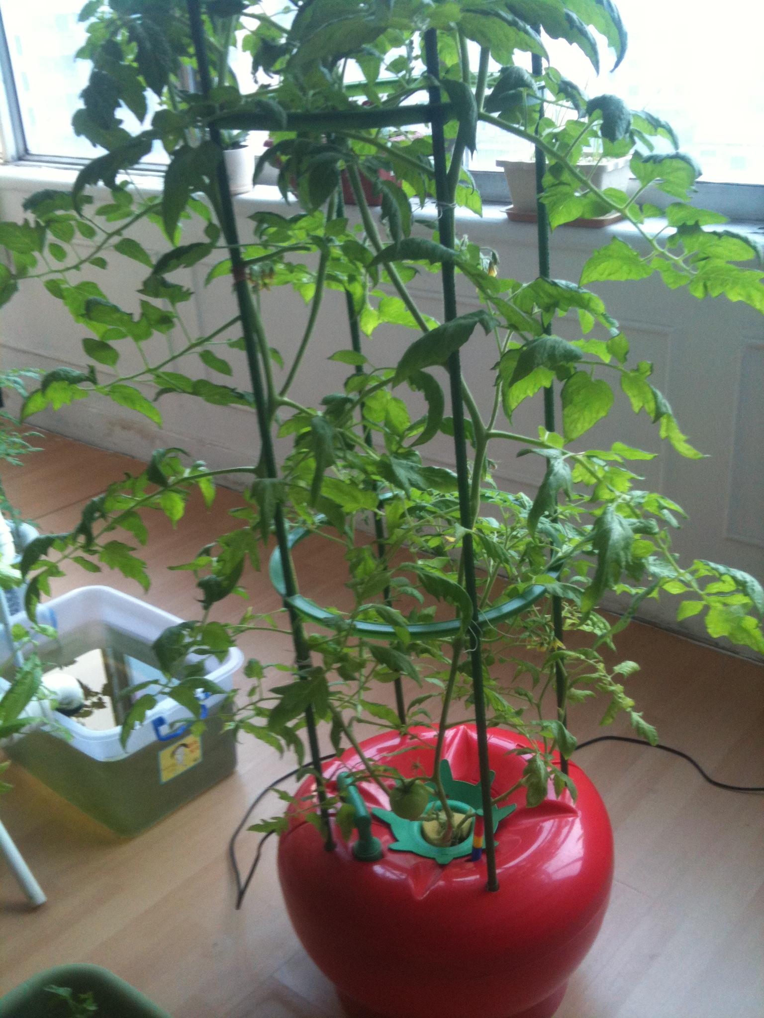 家庭水培蔬菜种植设备展示