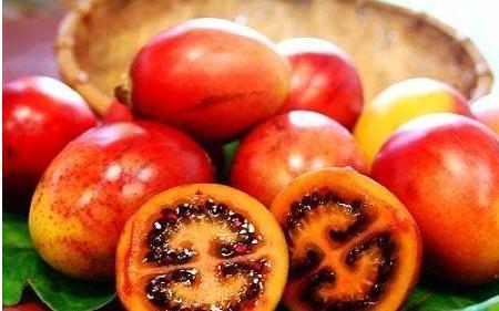西红柿树简笔画