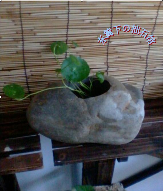 鹅卵石花盆 - 旮旯super水吧