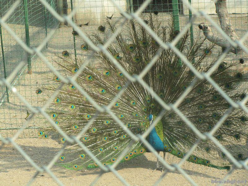 鲁泰文苑(原奎盛公园)的动物们