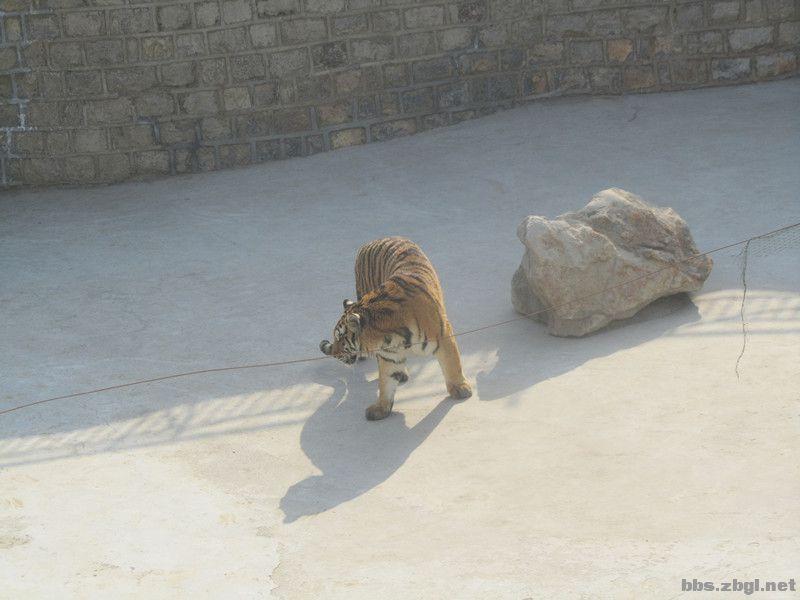 暴照!鲁泰文苑(原奎盛公园)的动物们