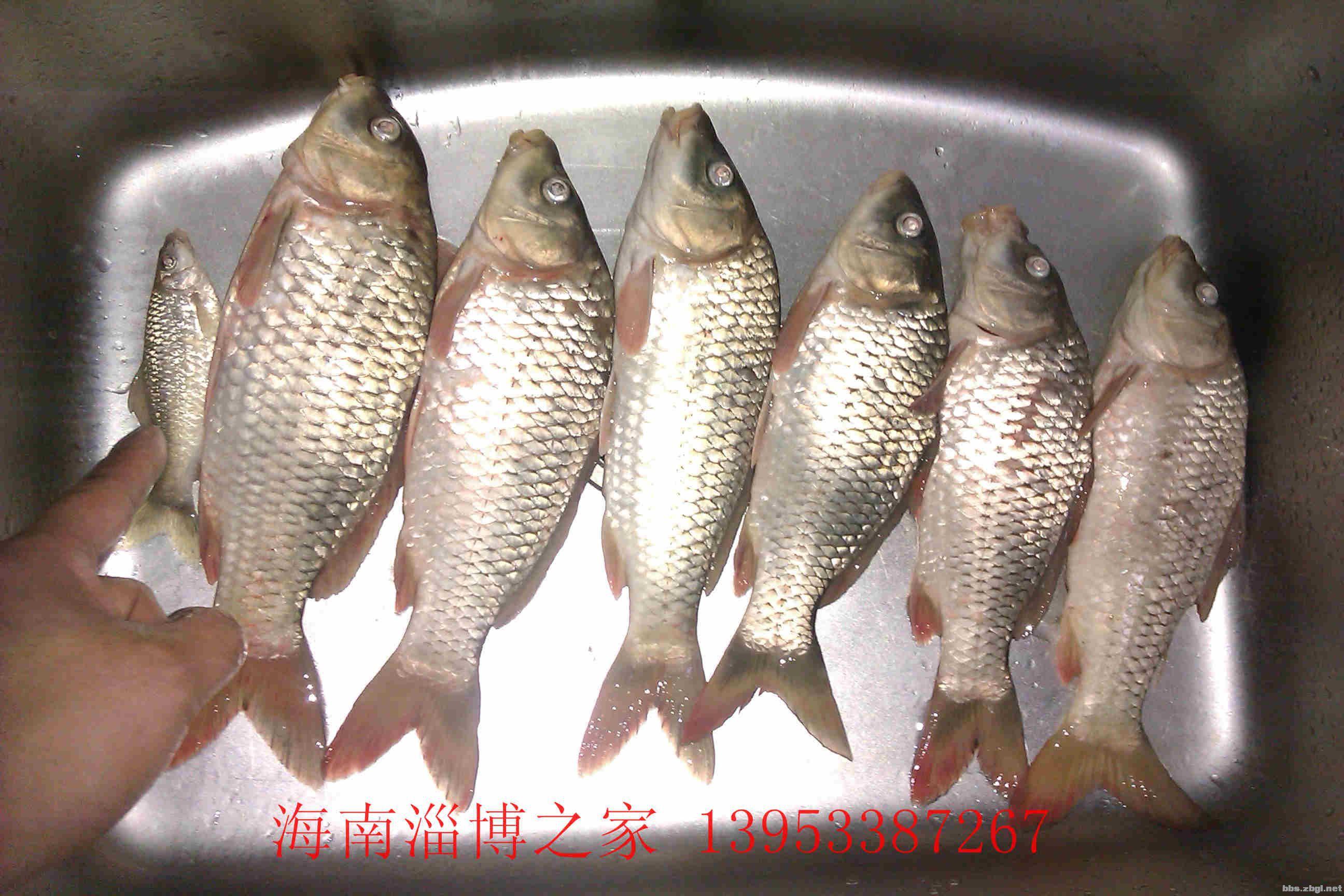 海南鱼类大全名称图片