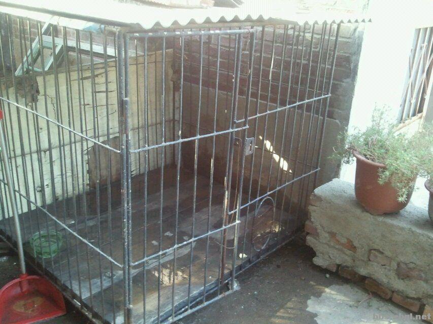 出售自制大狗笼子,照片