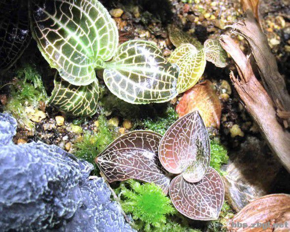 水陆动物简笔画