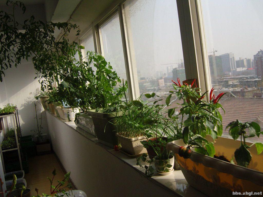阳台蔬菜种植宝,阳光房的首选种植