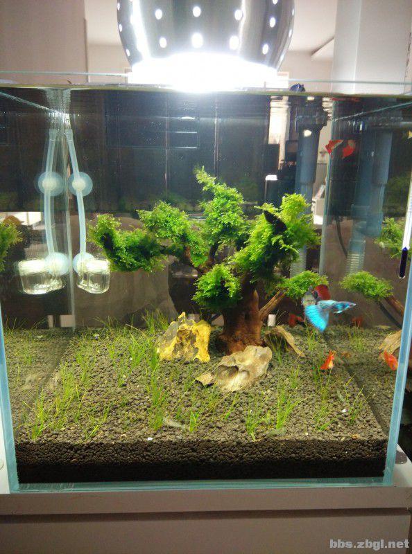 超白鱼缸 造景 高清图片