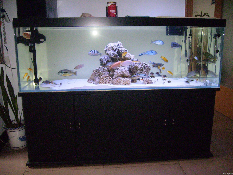 观赏鱼缸制作展示_设计图分享