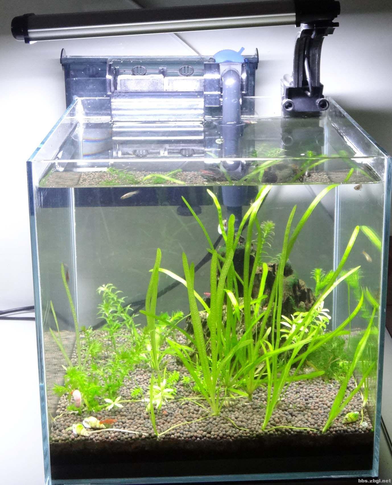 造景石,小型生态鱼缸及热带鱼