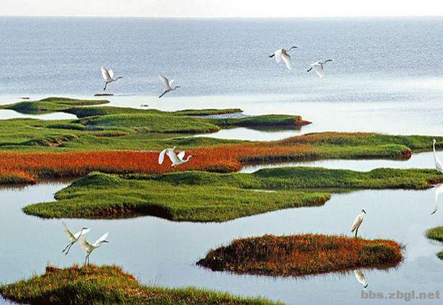 黄河口 红地毯 芦苇荡 亲近母亲之河 感受最美湿地! 山东东营黄河入海口这片1410平方公里的湿地,是世界上暖温带保存最广阔、最完善、最年轻的湿地生态系统.黄河三角洲湿地类型丰富,景观类型多样,分为天然湿地和人工湿地两大类。天然湿地包括淡水生态系统的河流、湖泊,陆地生态系统的湿草甸、灌丛、疏林、芦苇、盐碱化湿地等;人工湿地以坑塘、水库为主。黄河三角洲上河流纵横交错,各种湿地景观斑状分布、网状形态,河流、湖泊、河口水域、坑塘、水库、盐池和虾蟹池以及滩涂等常年积水地与重盐碱化湿地、芦苇沼泽、疏林沼泽、灌丛沼泽