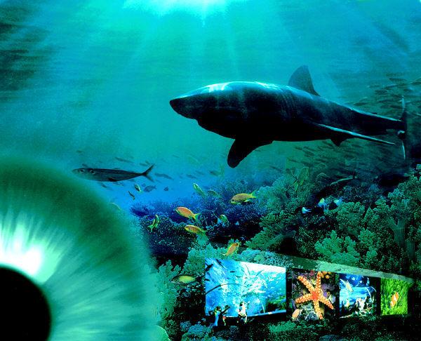 壁纸 海底 海底世界 海洋馆 水族馆 桌面 600_486