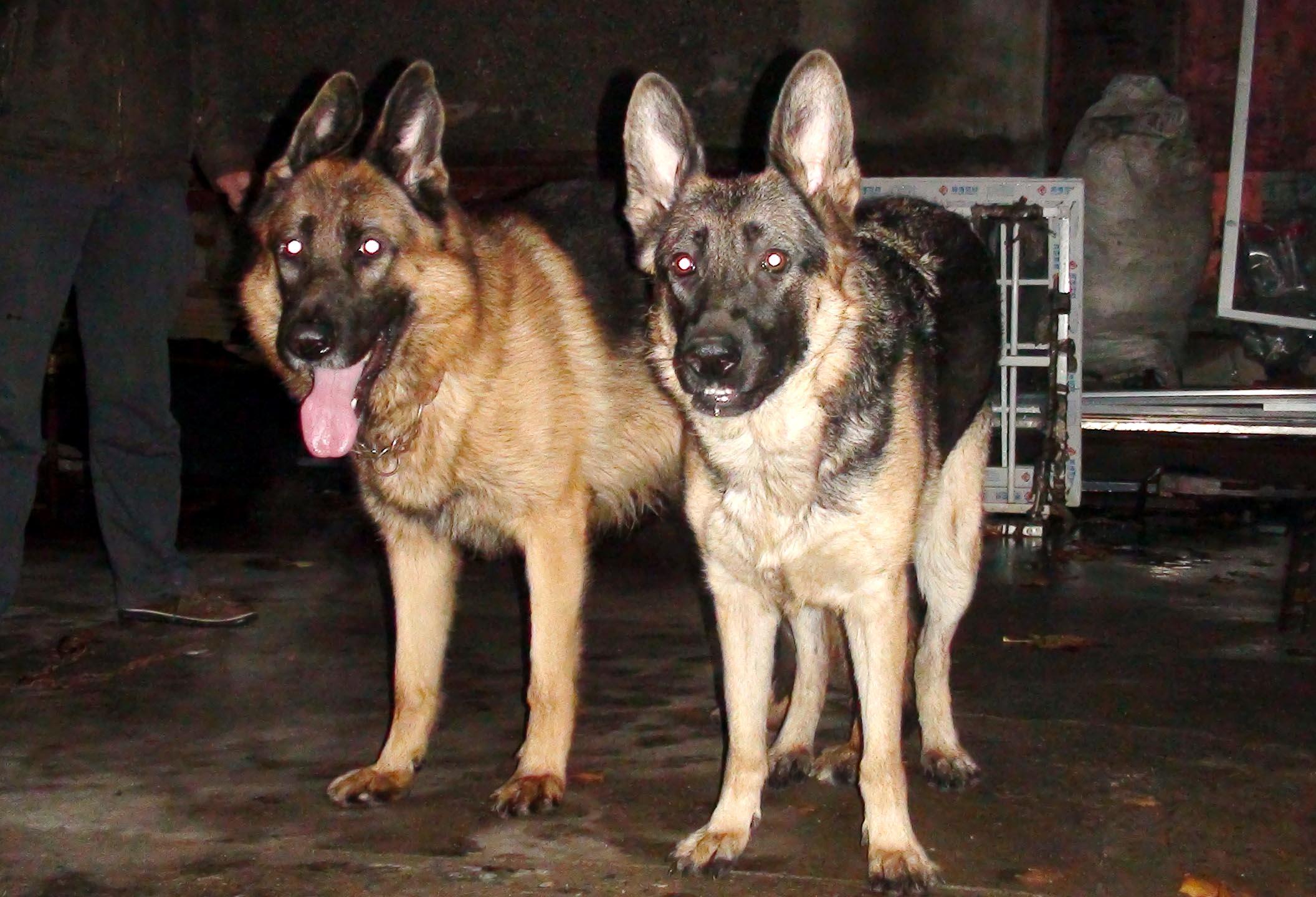 孕和狗干电影_与纯种狗交配一般一窝是2到4只小狗 狗狗的交配与怀孕期 狗狗的发情
